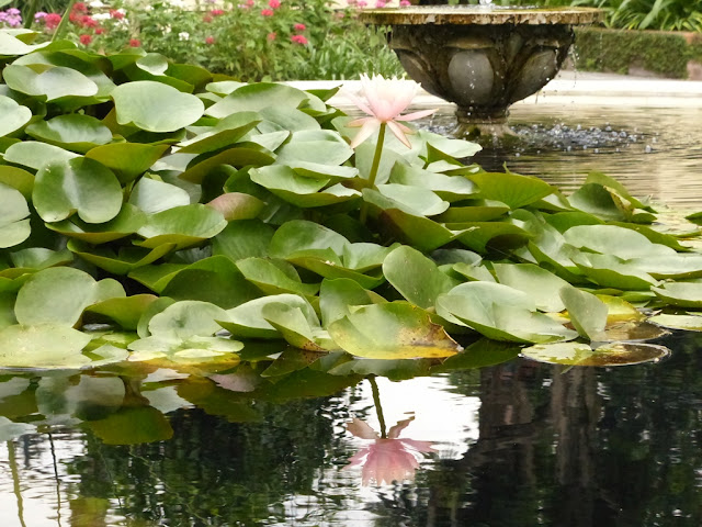 Lotuses at the Garden of Dreams in Kathmandu