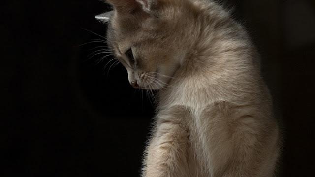 hình nền tình yêu buồn chú mèo