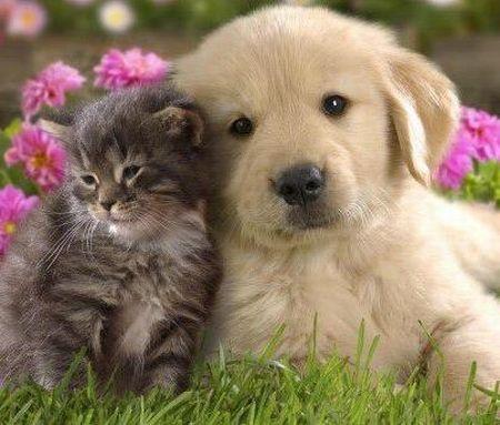 Cãozinho e gatinho