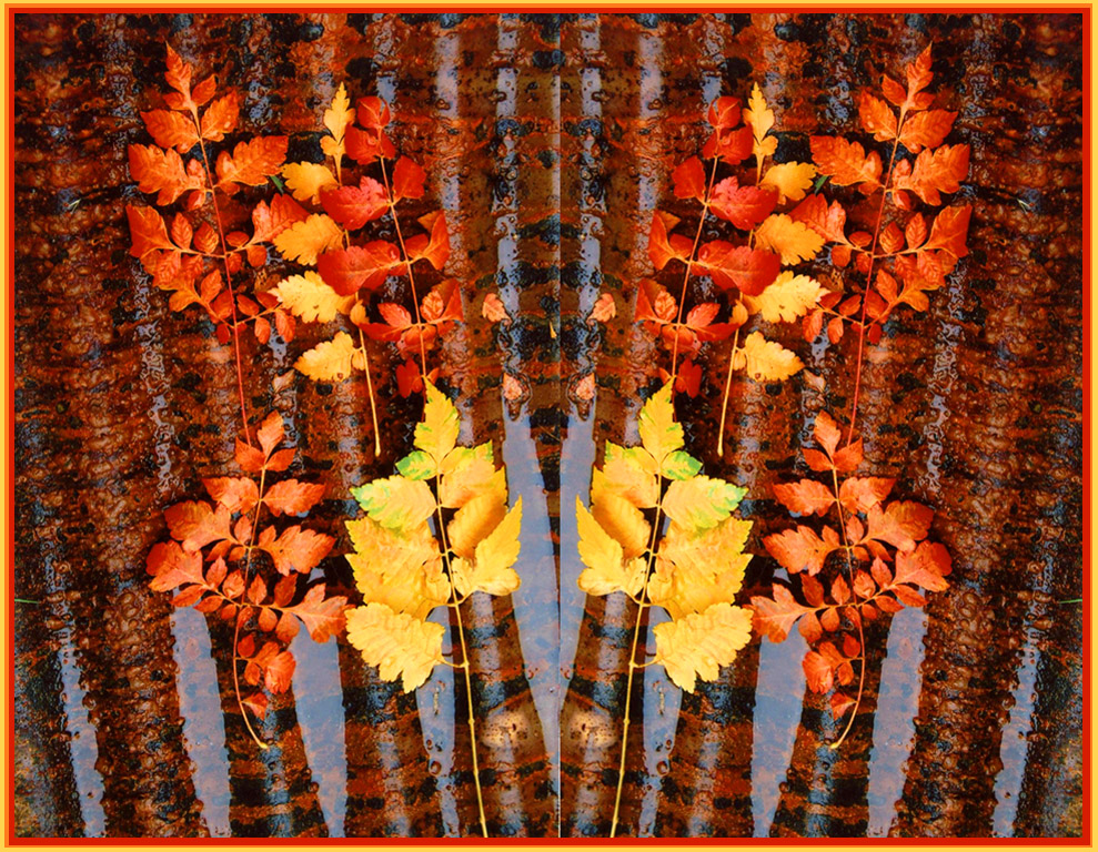 20130423 AS2Prucha+ +Colourful+Autumn 2013   Monthly Competition: Diptych/Triptych