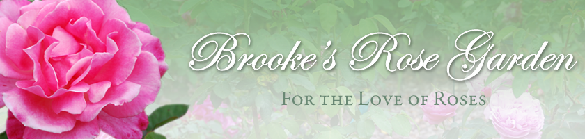 Brooke's Rose Garden