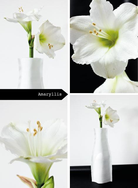 Die Amaryllis führt dezent in den Advent.