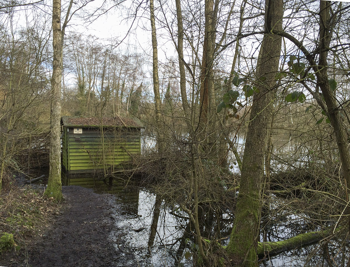 The watery John Carter hide.  Sevenoaks Wildlife Reserve, 22 February 2014.