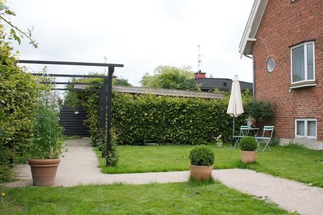 Pg pergolaen skal plantes et træ som fuglene skal have glæde af og