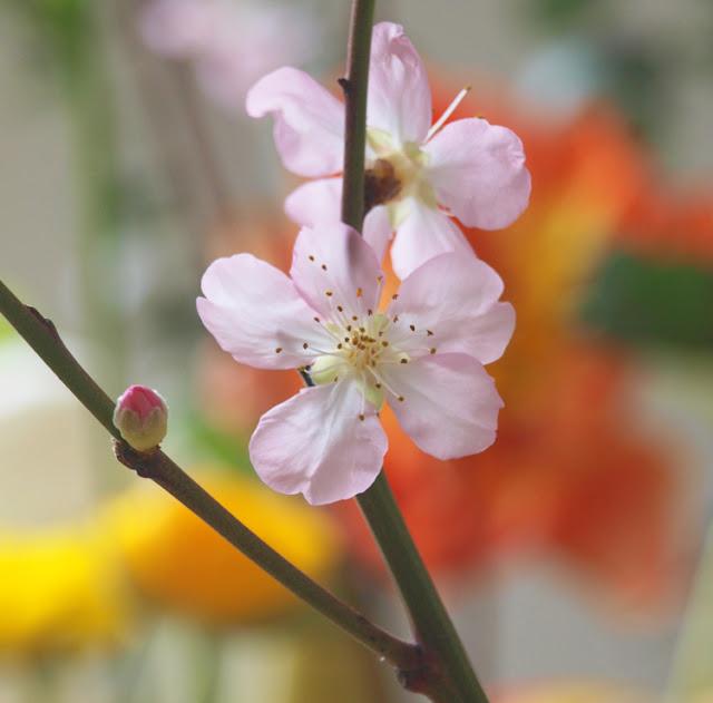 Lyserøde blomster på grene