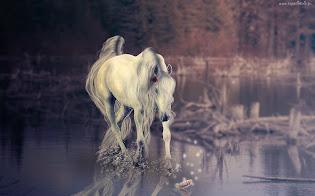 Przywódczyni stada - Milka