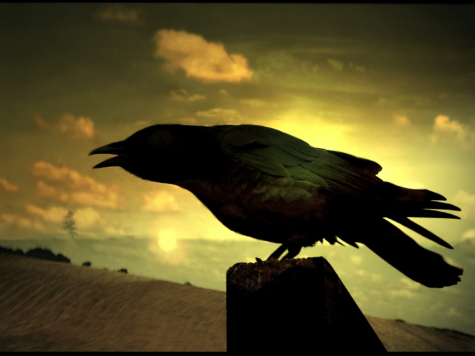 Lost in North America: Marine Crow (Cormoran) as an Assistant in Fisheries