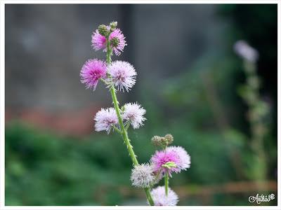 hoa trinh nu dep, hoa dai dep, ve dep hoa trinh nu