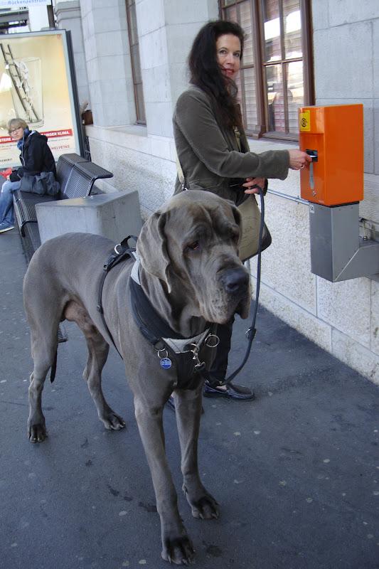 Lustige Bilder Deutsche Dogge - Schöne und lustige Tiervideos und Bilder Facebook