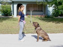 dog training tips for long lasting friendship