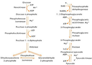 rate of reaction and the yield conversion biology essay Photosynthesis is a highly regulated, multistep process it encompasses the harvest of solar energy, transfer of excitation energy, energy conversion, electron.