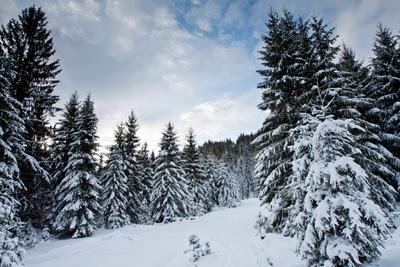 Фото Укринформ: зима в Карпатах