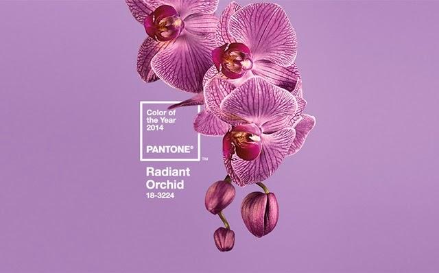 radiant_orchid_orquidea_radiante_2014