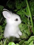 Frohe Ostern (lustige Sammlung)