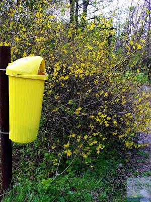 cos si flori galbene gradina botanica bucuresti