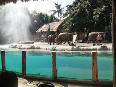 Konflik antara Manusia dan Gajah (Ilustrasi)