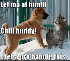 funny cat and dog let ma at him