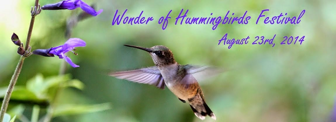 Wonder of Hummingbirds Blog