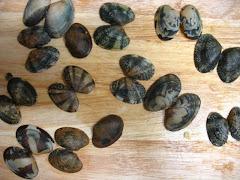 Mussel Shell Butterflies