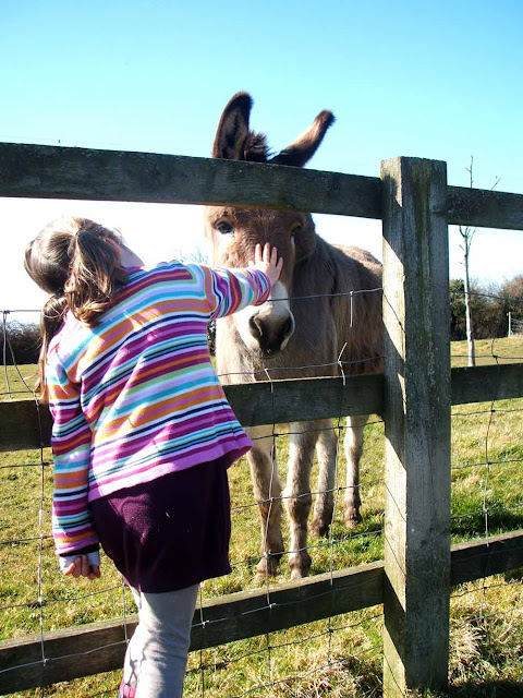 five active family days out in somerset court farm