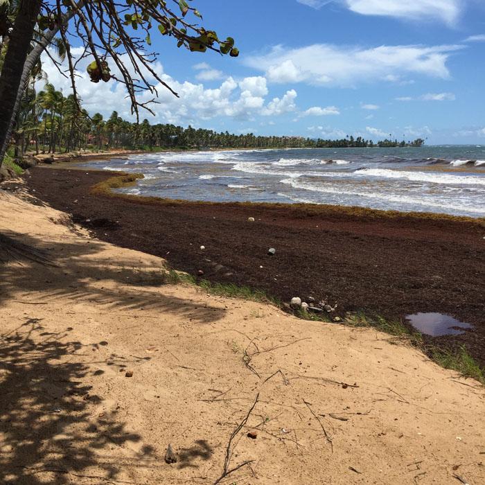 Palmas del Mar Beaches Sargasso