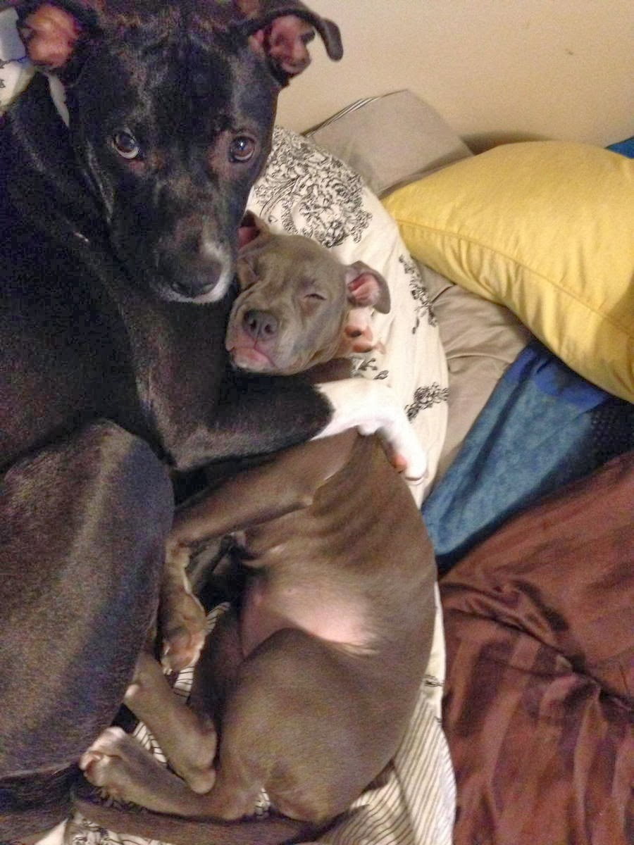Cute dogs - part 6 (50 pics), dog hugging his little brother pup