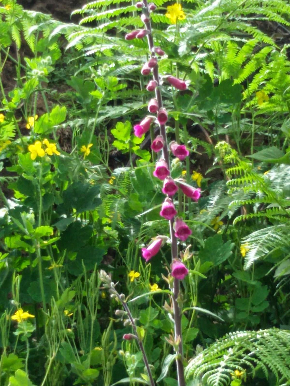 okowi madeira im mai bl ten wildblumen blau lila u pink. Black Bedroom Furniture Sets. Home Design Ideas