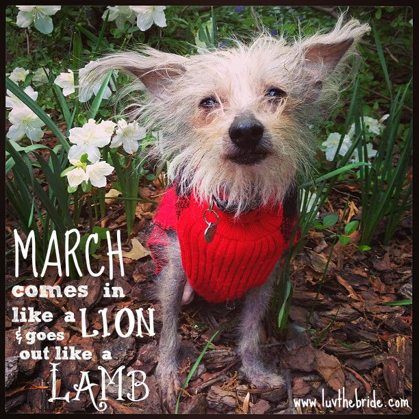 March Comes In Like And Goes Out Like >> Luv The Bride In Like A Lion