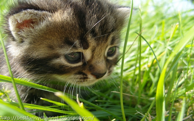 Kitten in the grass.