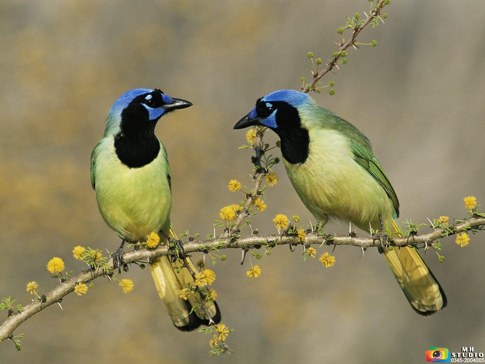 http://4.bp.blogspot.com/-uzwS_ThiJ5A/UKCuF3i9-JI/AAAAAAAABE8/WhpQIN-5zYY/s1600/beautiful+birds+hd+wallpaper+pakistan+mh+studio+tehsil+bazar+fort+abbas+mubashir+hassan+ch+03452004005+0632510005++(44).jpg
