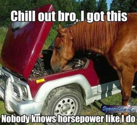 funny animals horse picture