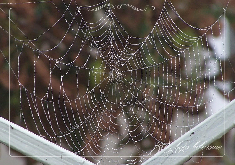 fotografować pajęczyny