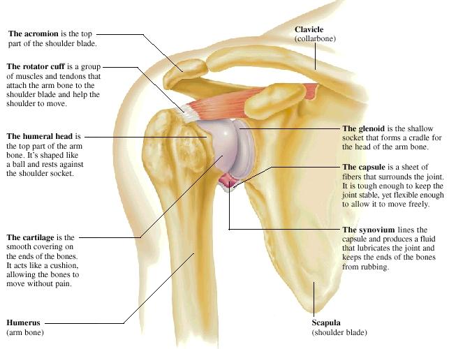 Shoulder Impingement Central Texas Orthopedics Patient Resource