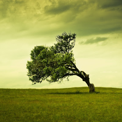 iPhone Wallpaper: Oblique Tree