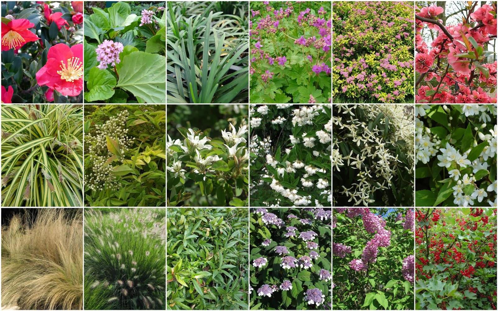 Plants and animals for Alberi perenni