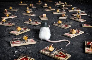 Kisah Sang Tikus Dan Jebakan Tikus