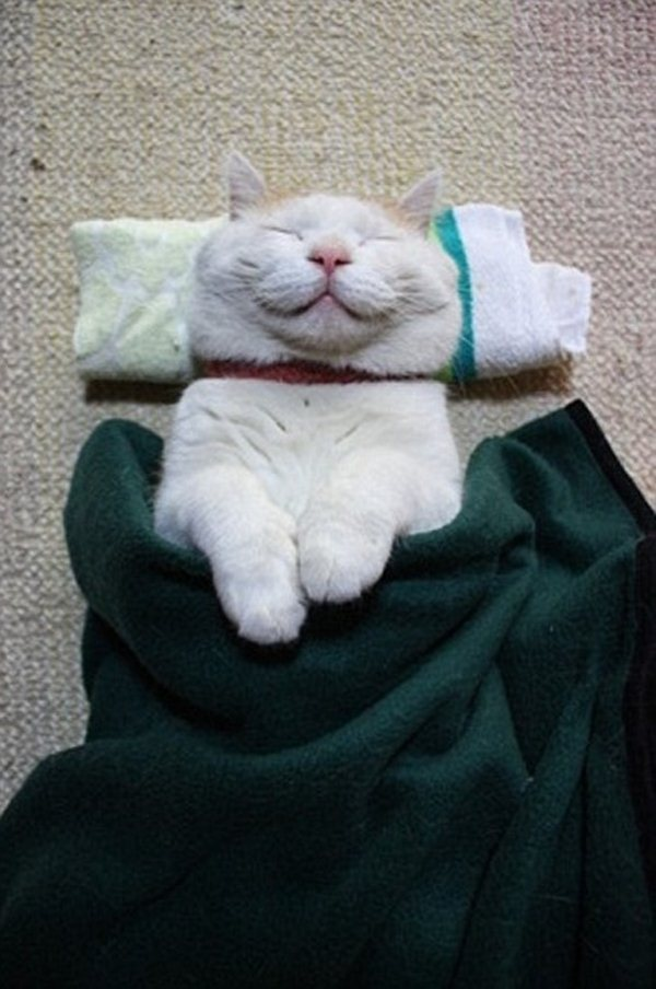 funny cat pictures, sleeping cat with blanket