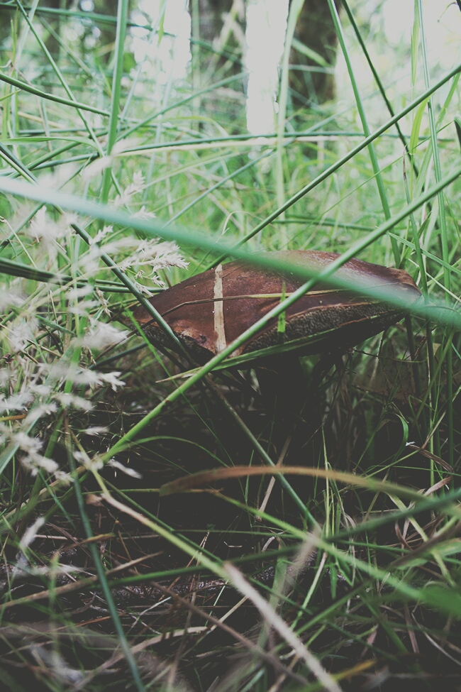 summer-forest-summer-story-ringwood-mushrooms-in-the-grass-todaymyway