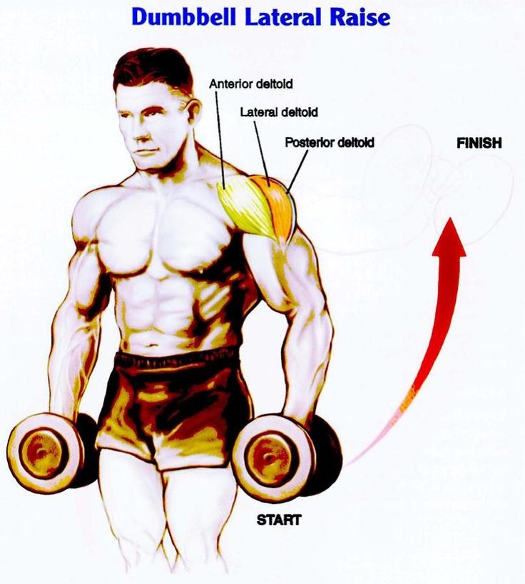 Best Deltoid Exercises | Health Articles