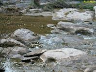 La roca erosionada per la riera de Merlès. Autor: Carlos Albacete