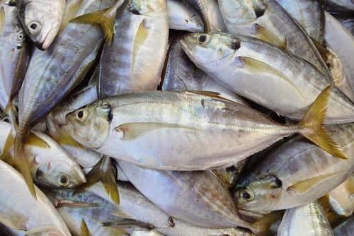 Cá Ngân Long Hương  - dacsanthiennhien.net