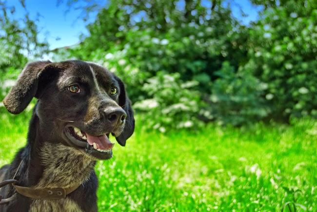 Zabieg kastracji i sterylizacji u psów i suczek