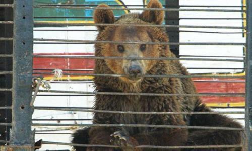 La Secretaría de Ambiente obligó al dueño a retirar los animales de