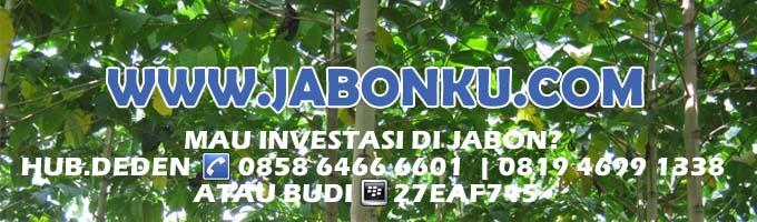 Jabon, Investasi Jabon, Budidaya Jabon, Kebon Jabon, Kayu Jabon, Pohon Jabon, Bibit Jabon