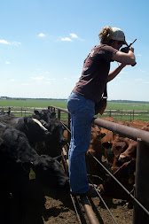 Taking photos during my internship at Heartland Cattle Company