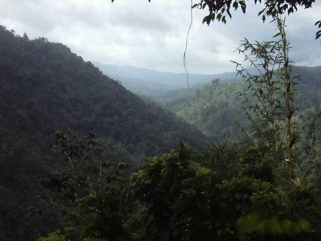 Bunut Bolong area