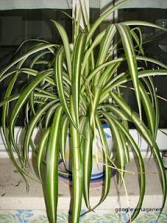 todo tipo de plantas