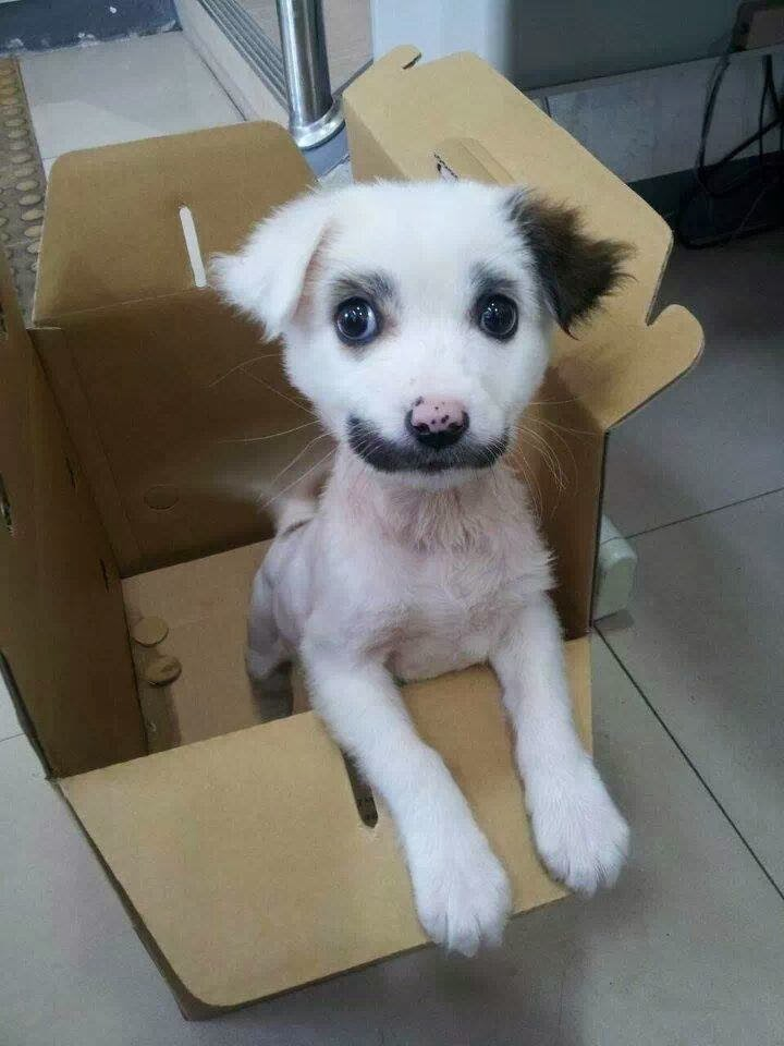 adorable dog pictures, cute puppy in a box