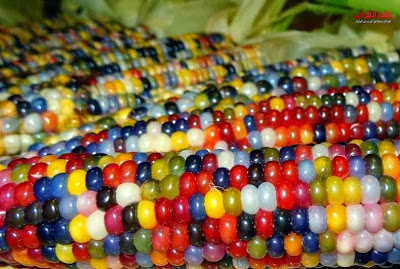 الذرة الملونة، العجائب والغرائب، عالم العجائب