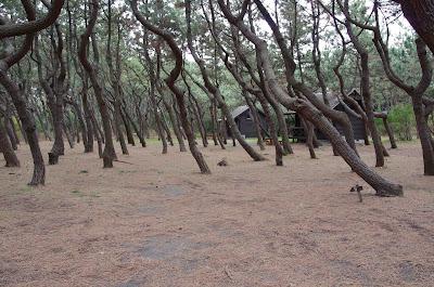 茅ヶ崎柳島キャンプ場